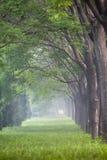 La nebbia della mattina fotografie stock