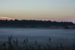La nebbia della palude Fotografia Stock Libera da Diritti