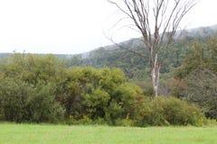 La nebbia e la nuvola hanno coperto la montagna di campo verde e gli alberi in priorità alta Fotografia Stock Libera da Diritti