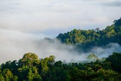La nebbia a Khao Phanoen Thung, parco nazionale di Kaeng Krachan in Th Fotografia Stock Libera da Diritti