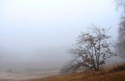 La nebbia nella foresta Fotografie Stock Libere da Diritti