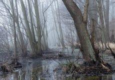 La nebbia nella foresta Immagine Stock