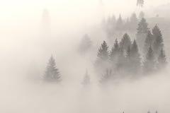 La nebbia sta scalando sulla collina prima dell'alba Fotografia Stock