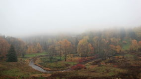 La nebbia sta venendo sulla foresta archivi video