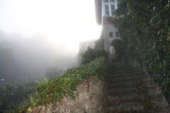 La nebbia viene al giardino Immagine Stock