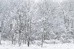 La neige blanche a couvert des bois en Nouvelle Angleterre Photos libres de droits