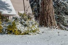 La neige blanche a couvert le paysage près d'un bâtiment image stock