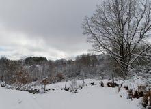 La neige blanche de l'hiver a couvert le paysage entier image stock