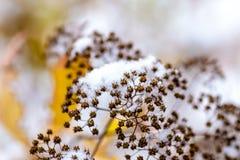 La neige blanche est tombée en automne en retard L'hiver tôt image stock