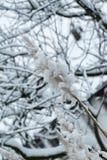 La neige collante rend tout des sembler différents images libres de droits