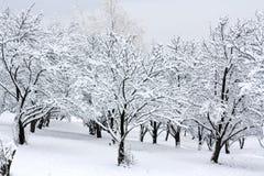 La neige a couvert des arbres Images stock