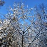 La neige a couvert des arbres image stock