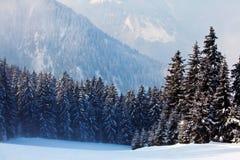 La neige a couvert des arbres photos stock