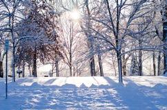 La neige a couvert des arbres au soleil Photos stock