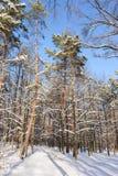 La neige a couvert des arbres d'hiver Photographie stock libre de droits