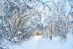 La neige a couvert des arbres d'hiver Photos libres de droits