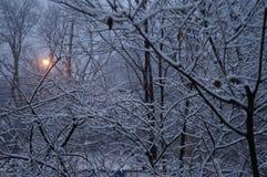La neige a couvert des arbres dans le matin Photos libres de droits