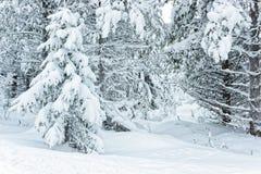 La neige a couvert des arbres dans Ruka en Finlande sur le cercle arctique de poteau photos stock
