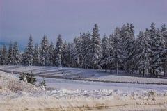 La neige a couvert des arbres dans Sierra Nevada Image libre de droits