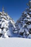 La neige a couvert des arbres dans une ligne Images libres de droits