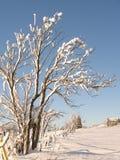 la neige a couvert des arbres dans une ligne de frontière de sécurité au Québec rural Photographie stock libre de droits