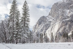 La neige a couvert des arbres dans Yosemite image libre de droits