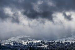 La neige a couvert des arbres de Noël de sapin sur le flanc de montagne Photo stock