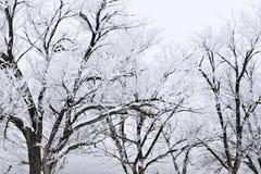 La neige a couvert des arbres de tempête de approche Photographie stock libre de droits