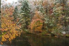 La neige a couvert des arbres en automne Photo stock