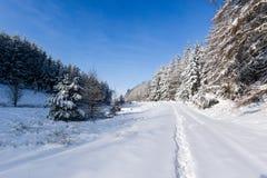 La neige a couvert des arbres en hiver photos libres de droits