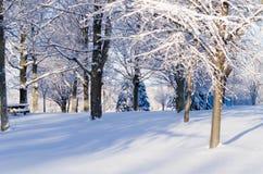 La neige a couvert des arbres en journée Images stock
