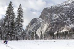 La neige a couvert des arbres en parc national de Yosemite photographie stock libre de droits