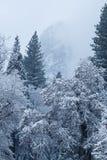 La neige a couvert des arbres en vallée de Yosemite Photographie stock libre de droits