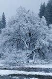 La neige a couvert des arbres en vallée de Yosemite Photographie stock