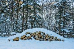 La neige a couvert des arbres et des logs image libre de droits