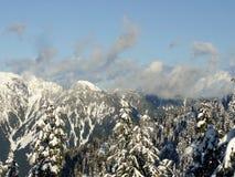 La neige a couvert des arbres et des montagnes Photo libre de droits