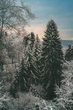 La neige a couvert des arbres, forêt d'Odenwald Image libre de droits