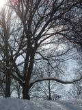 La neige a couvert des arbres un jour ensoleillé du ` s d'hiver Photographie stock