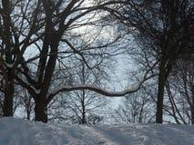 La neige a couvert des arbres un jour ensoleillé du ` s d'hiver Images libres de droits