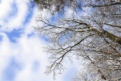 La neige a couvert des arbres, vue inférieure Images libres de droits