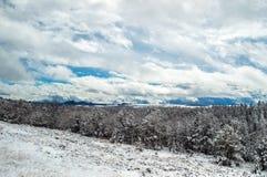 La neige a couvert des bois au Wyoming Photographie stock