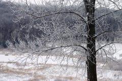 La neige a couvert des branchements images stock