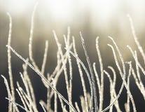 La neige a couvert des branchements Photographie stock libre de droits