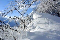 La neige a couvert des branchements Photo stock