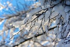 La neige a couvert des branchements Image libre de droits