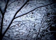 La neige a couvert des branchements d'arbre Photographie stock