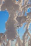 La neige a couvert des branchements d'arbre Images stock