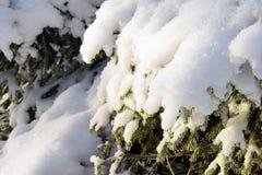La neige a couvert des branchements d'arbre de sapin Photographie stock libre de droits