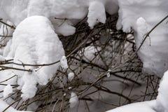 La neige a couvert des branchements en hiver Photographie stock libre de droits
