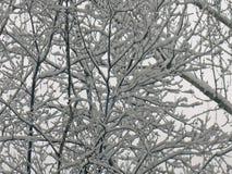 La neige a couvert des branches images stock